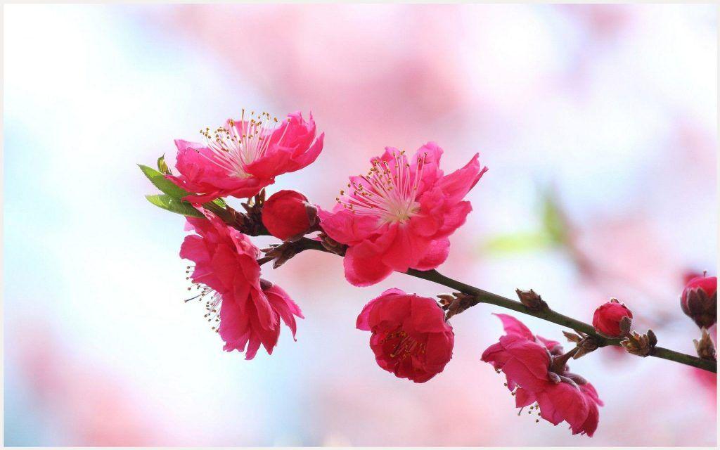 Red Blossom Flowers Wallpaper