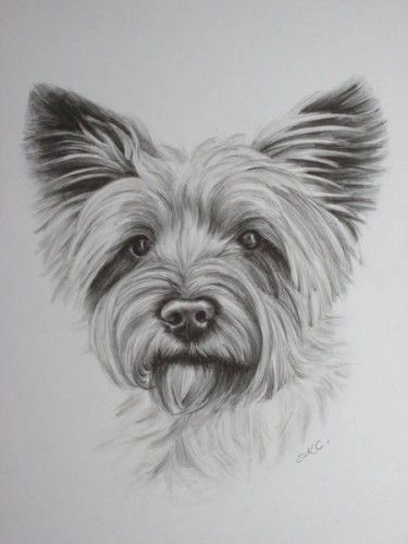 Cairn Terrier A Drawing Of A Small Cairn Terrier Dog Cairn