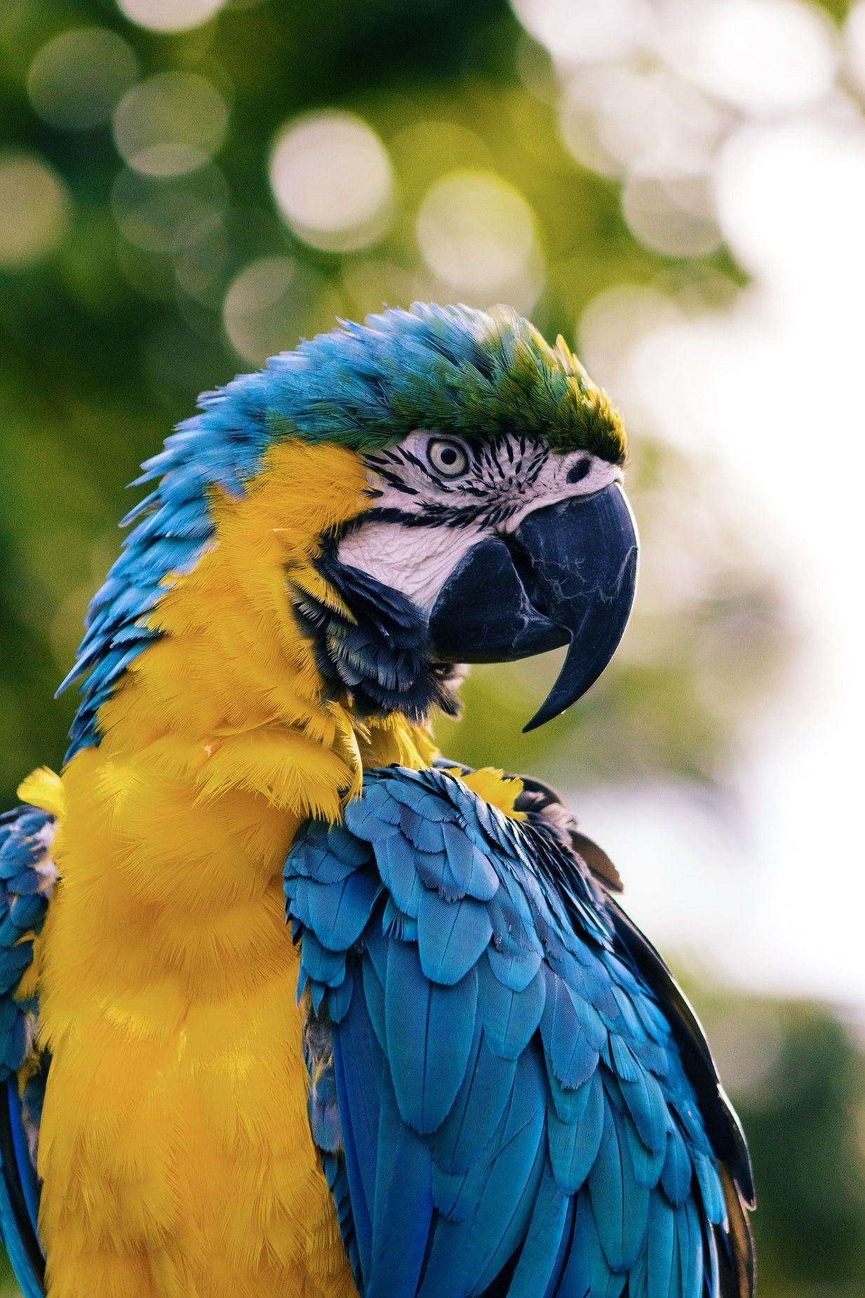 Pin Von Ute Maur Auf Naturbilder Mit Bildern Regenwald Tiere