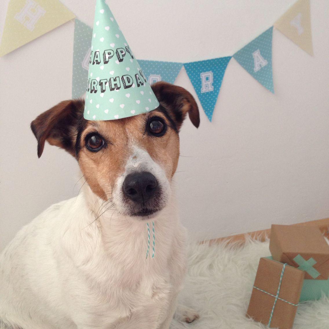 Happy Birthday To You Dog
