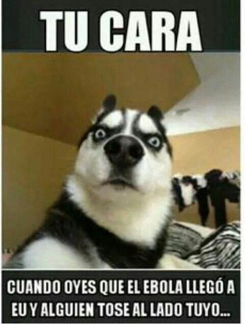 Pin By Caro Diaz On Memes Dog Expressions Funny Animals Funny Dog Videos