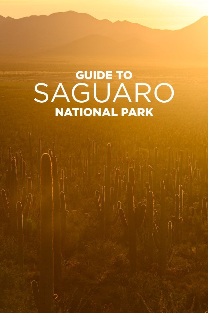 11 Beautiful Things To Do In Saguaro National Park Local