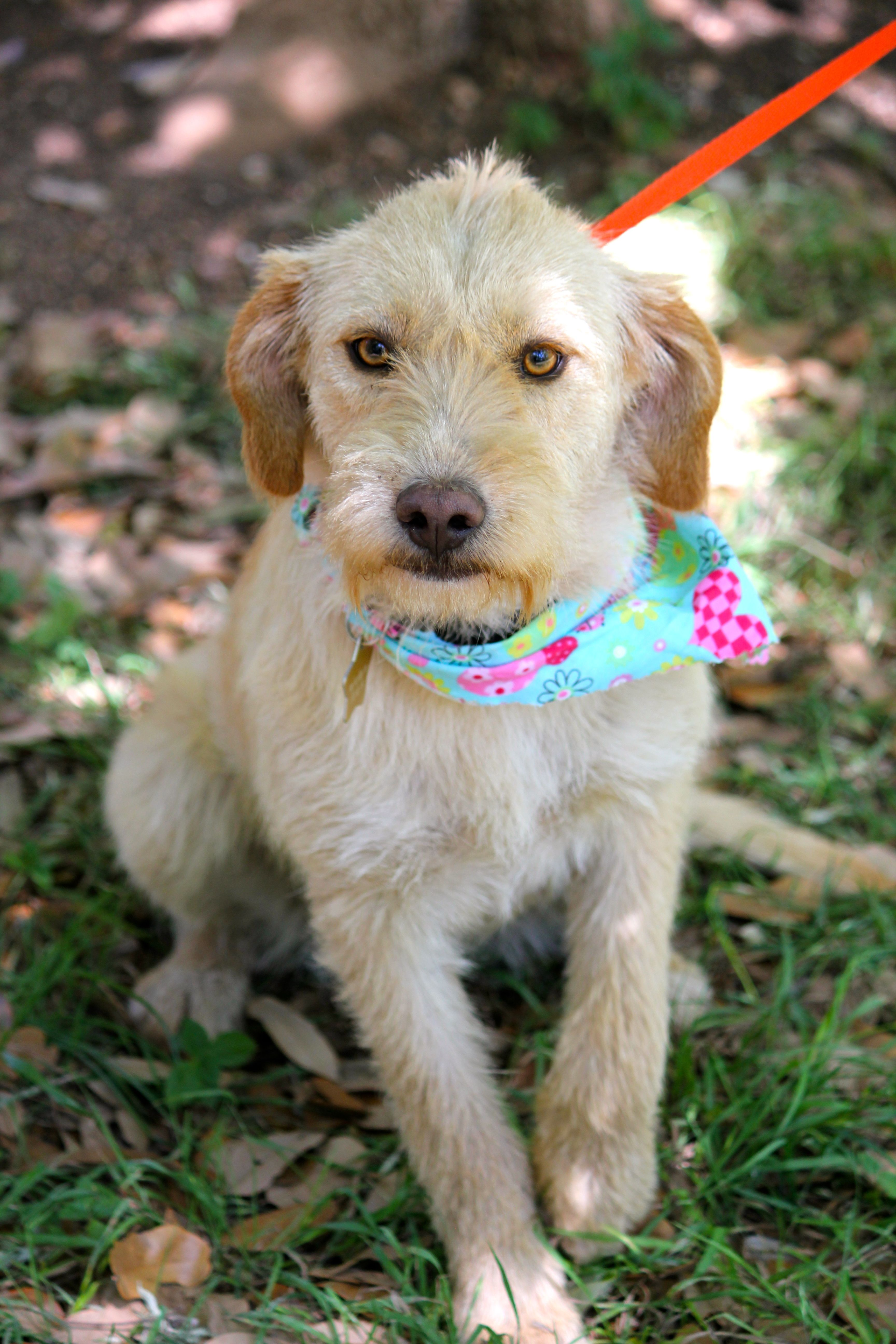 Pin by TracysDogs on TracysDogs Available for Adoption