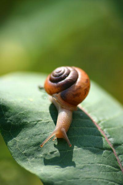 Snail By Spllogics Photo On Deviantart Schnecken Sind Kult Schnecken Und Tiere