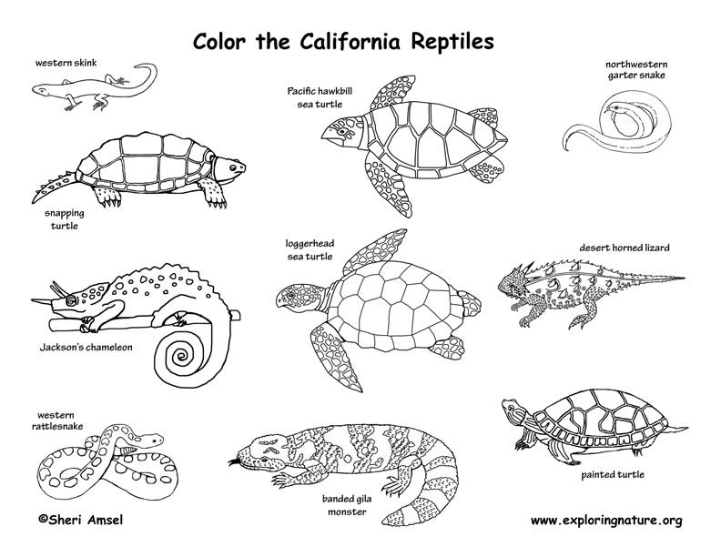 California Reptiles Coloring Page