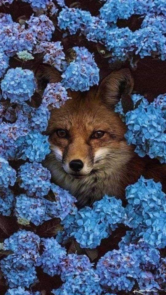 Oboi S Lisichkami Animalphotographyfox Lisichkami Oboi Tierbilder Tiere Tierfotografie