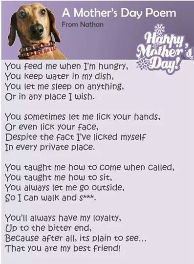 Pin By Sheila Swiderski On Little Paws Dachshund Rescue Foster Group Dog Mothers Day Mothers Day Poems Dog Poems