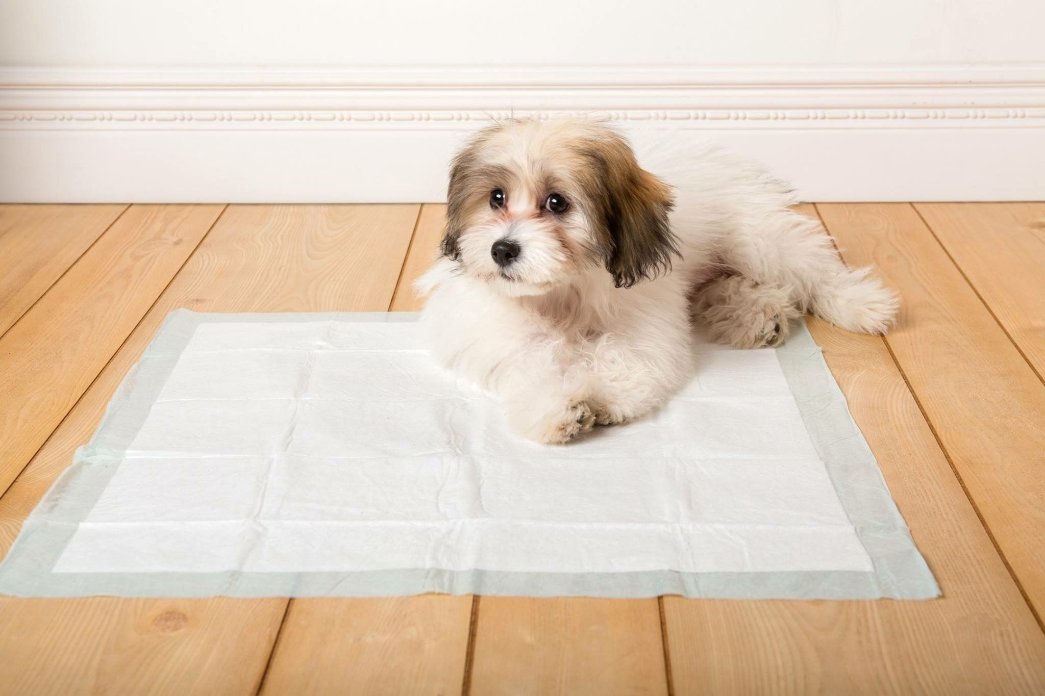 The Patented Flash Dry Technology And Plastic Backing And Border On Each Hartz Home Protection Dog Pad Protects All Floor Types From Lea Dog Pads Dogs Your Pet
