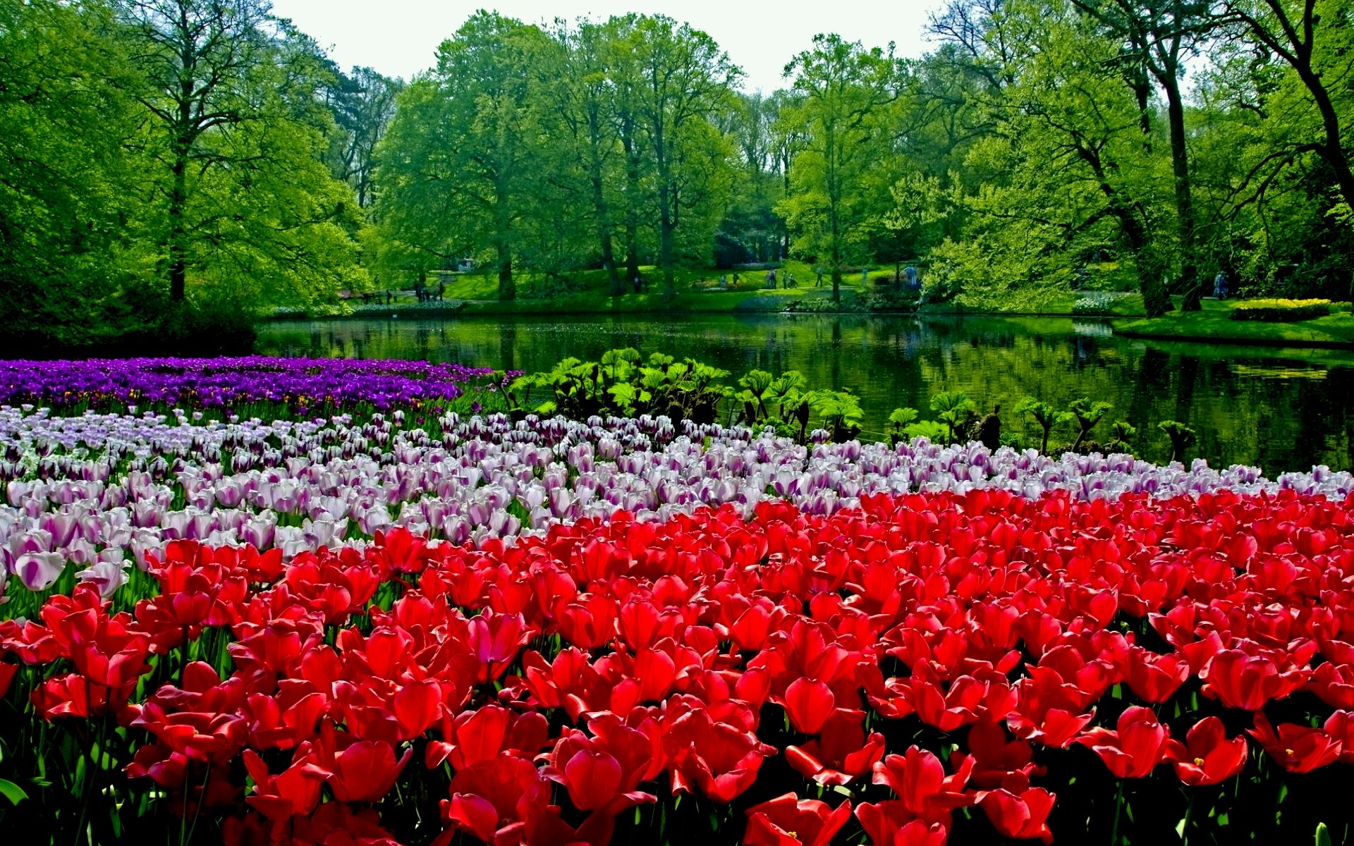 35 Beautiful Spring Pictures And Wallpapers Spring Pictures Spring Landscape Beautiful Nature