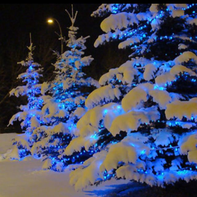 Blue lights on snow covered trees gives the illusion of