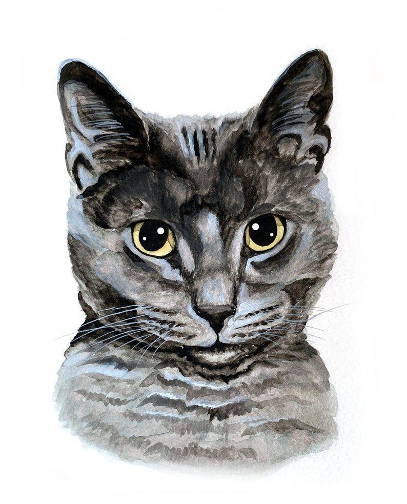 40+ Cat custom information