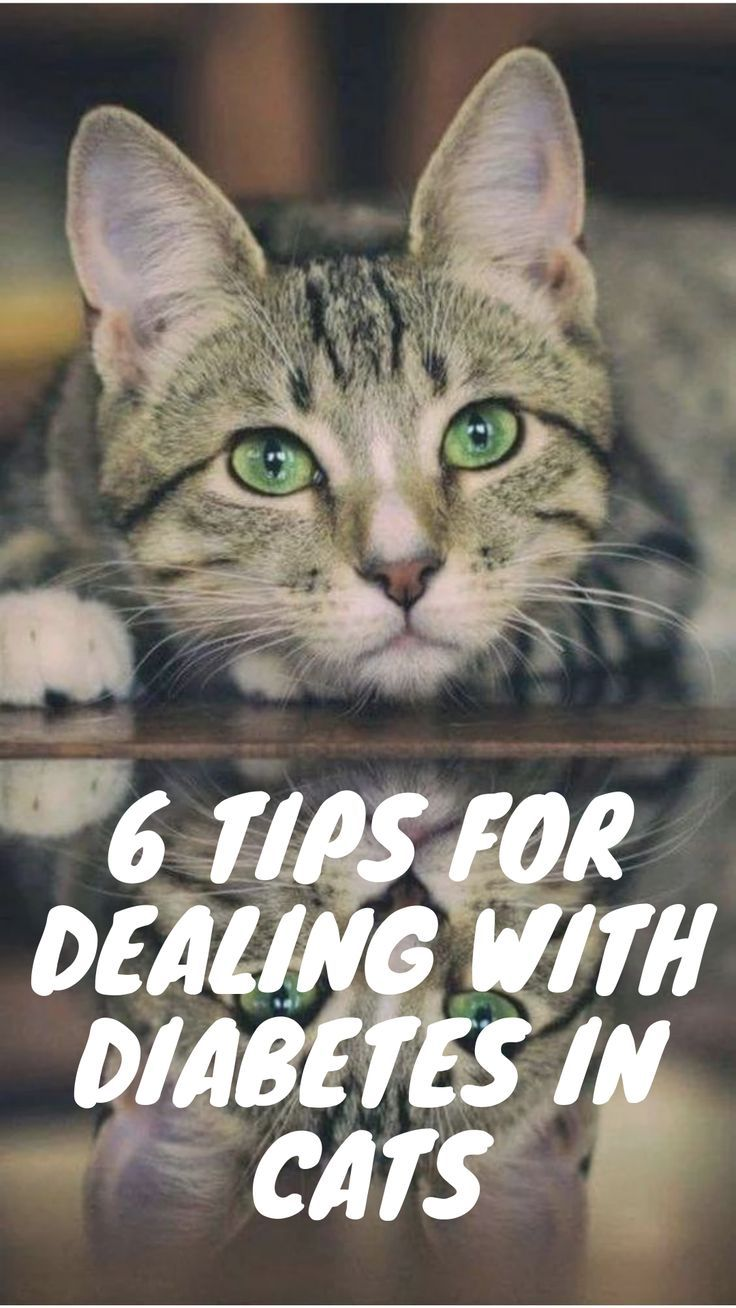 6 Tips for Successfully Managing Your Diabetic Cat