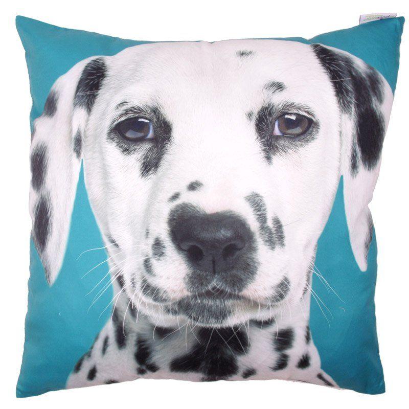 Decorative Dalmatian Print Turquoise Cushion