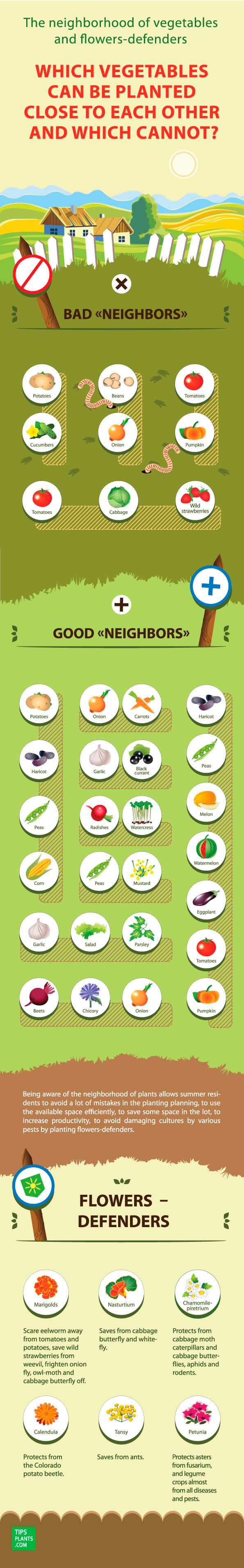 18 Most Important Rules of Companion of Plants and Vegetables in The Garden #infographic #Gardening #Food