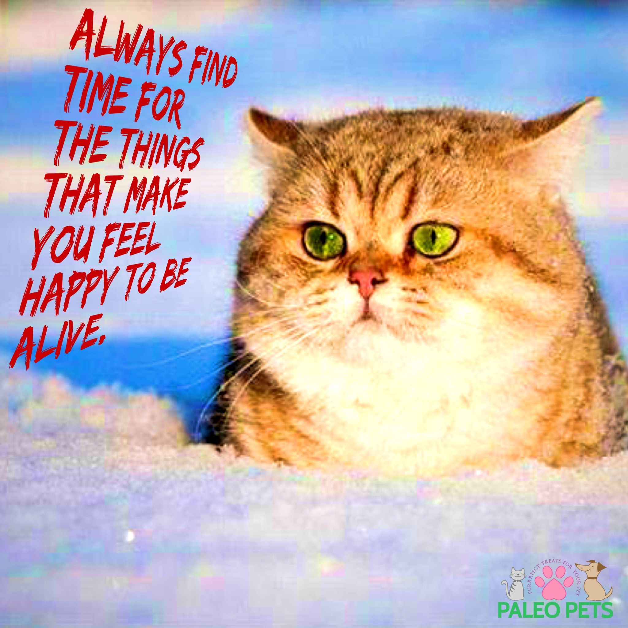 Happy Wednesday Cats Pets Quotes Paleopets Animals And Pets Cute Animals Pets