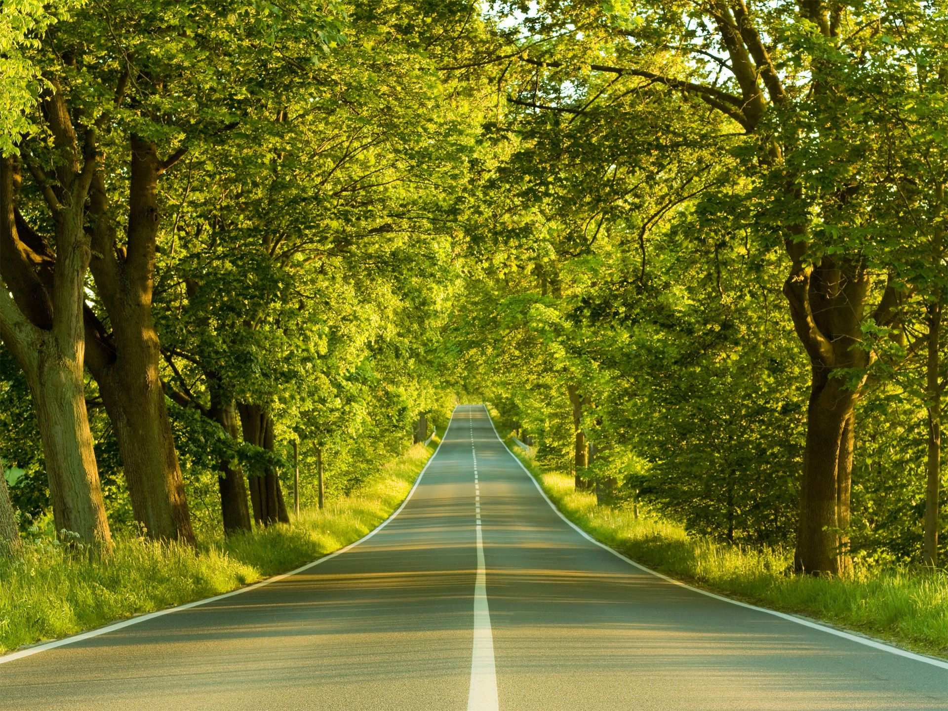Road To Nowhere Forest Nowhere Road Trees Landscape Nature Hd Scenery Wallpaper Nature Desktop Nature Wallpaper