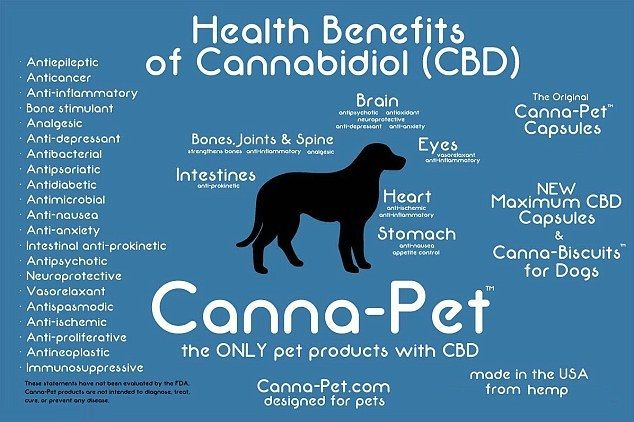 #MedicalMarijuana has offered pain relief to #dogs suffering from #arthritis. #MedicalMarijuana #medicalmarijuanadoctor #California #potexam