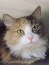 Adopt Peaches On Cute Cats Cat Boarding Cats