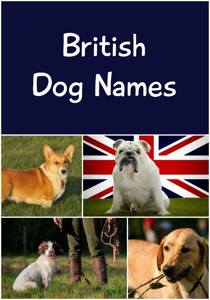 British Dog Names Awesome Name Ideas For Your Pup 145 Names Dog Names British Dog Cute Names For Dogs