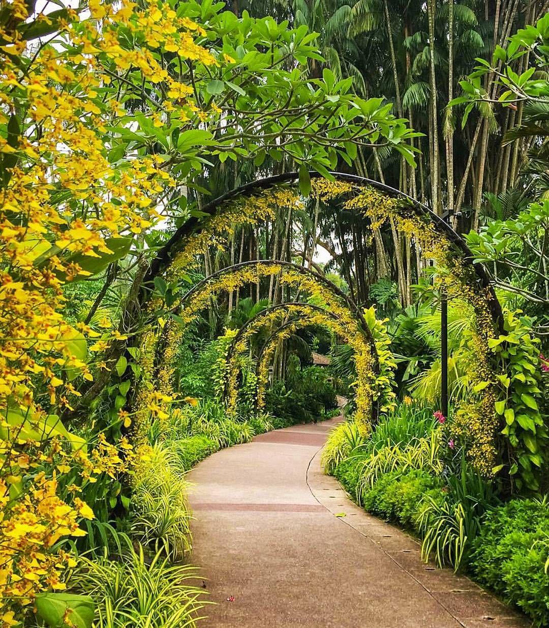 Singapore Botanic Gardens Photo by ivanaljubas by
