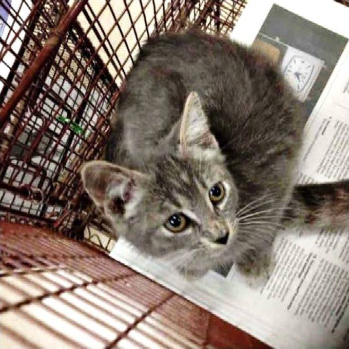 Urgent Cats Of Tampa On Cats Kittens Adoption