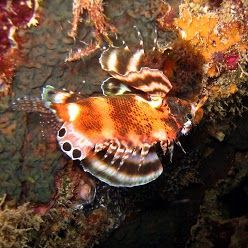 plongée de nuit dans le jardin de corail avec Atimoo plongée
