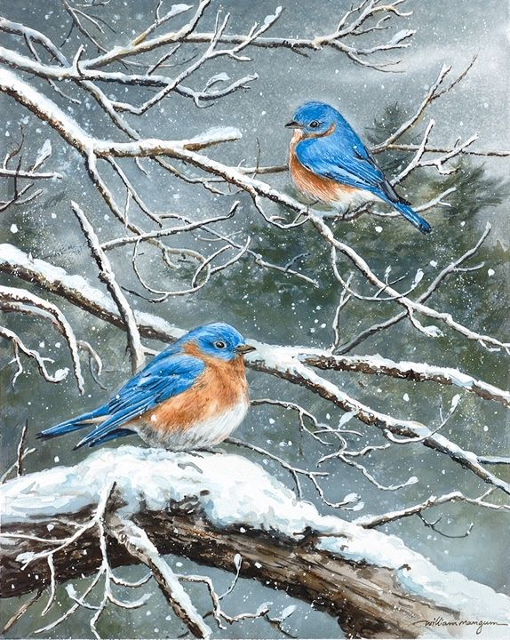 Jack and Frost Complimentary Print - William Mangum Fine Art