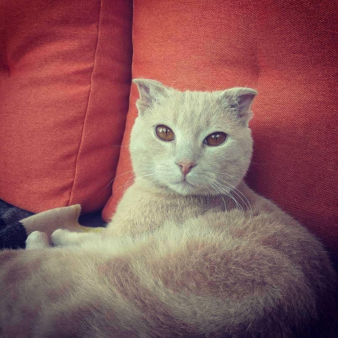 Ukrainskijlevkoj Levkojkotyata Vyazkakotovkiev Vyazkakotov Kot Cute Cat Drawing Baby Cats Cat Silhouette