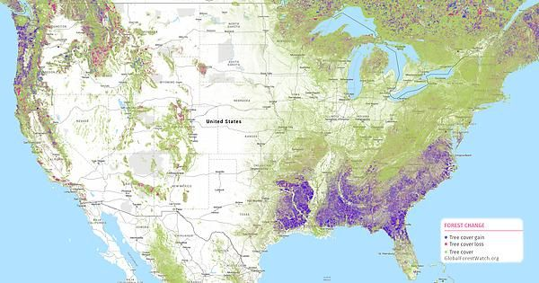 US Forest Cover Change Since 2000 from GlobalForestWatchorg