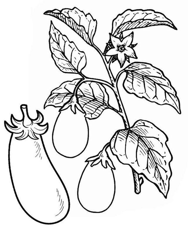 Eggplant Tree Vegetable Coloring Page Warna, Gambar, Pohon