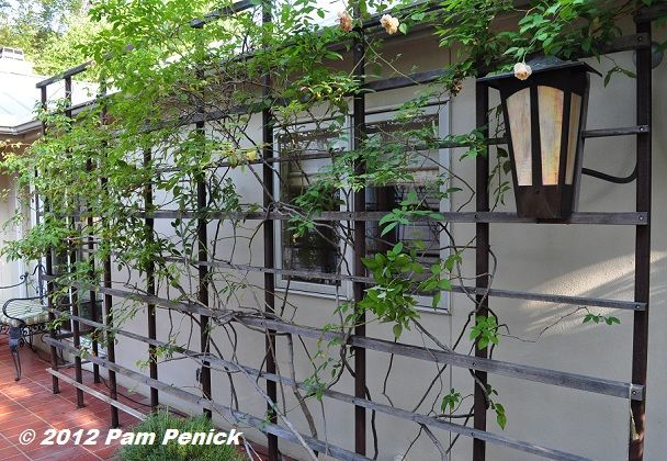 Metal-and-wood-slat trellis smothered in roses, with the outdoor lantern attached to the trellis