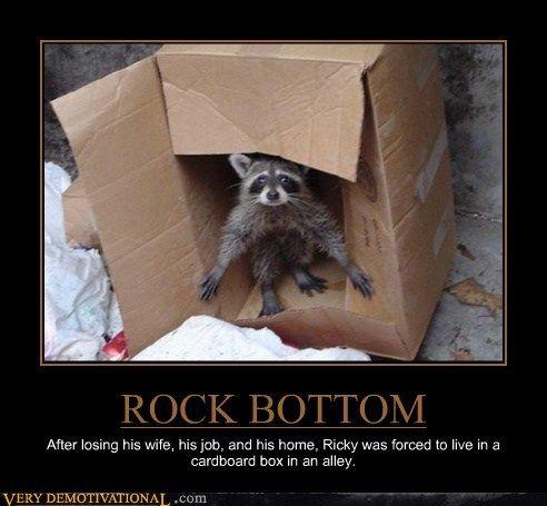 5fb09e88086aced38b25a1ddf8866cd1 the sad life of ricky raccoon raccoons
