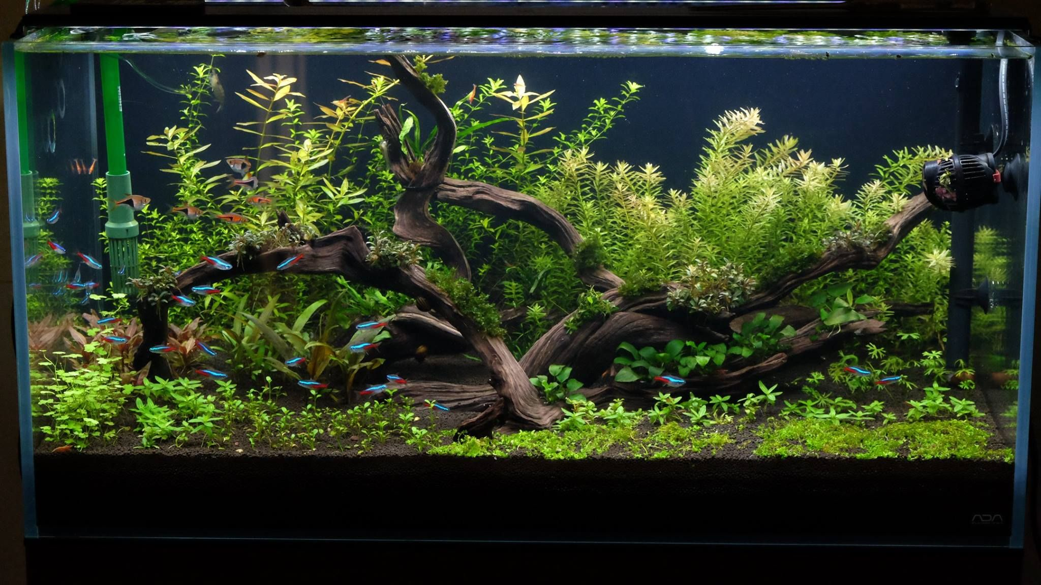 Aquascaping with plastic plants only