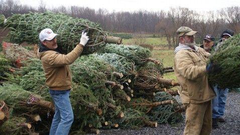 Growers Seek Help Getting Christmas Trees to Sandy Victims ...