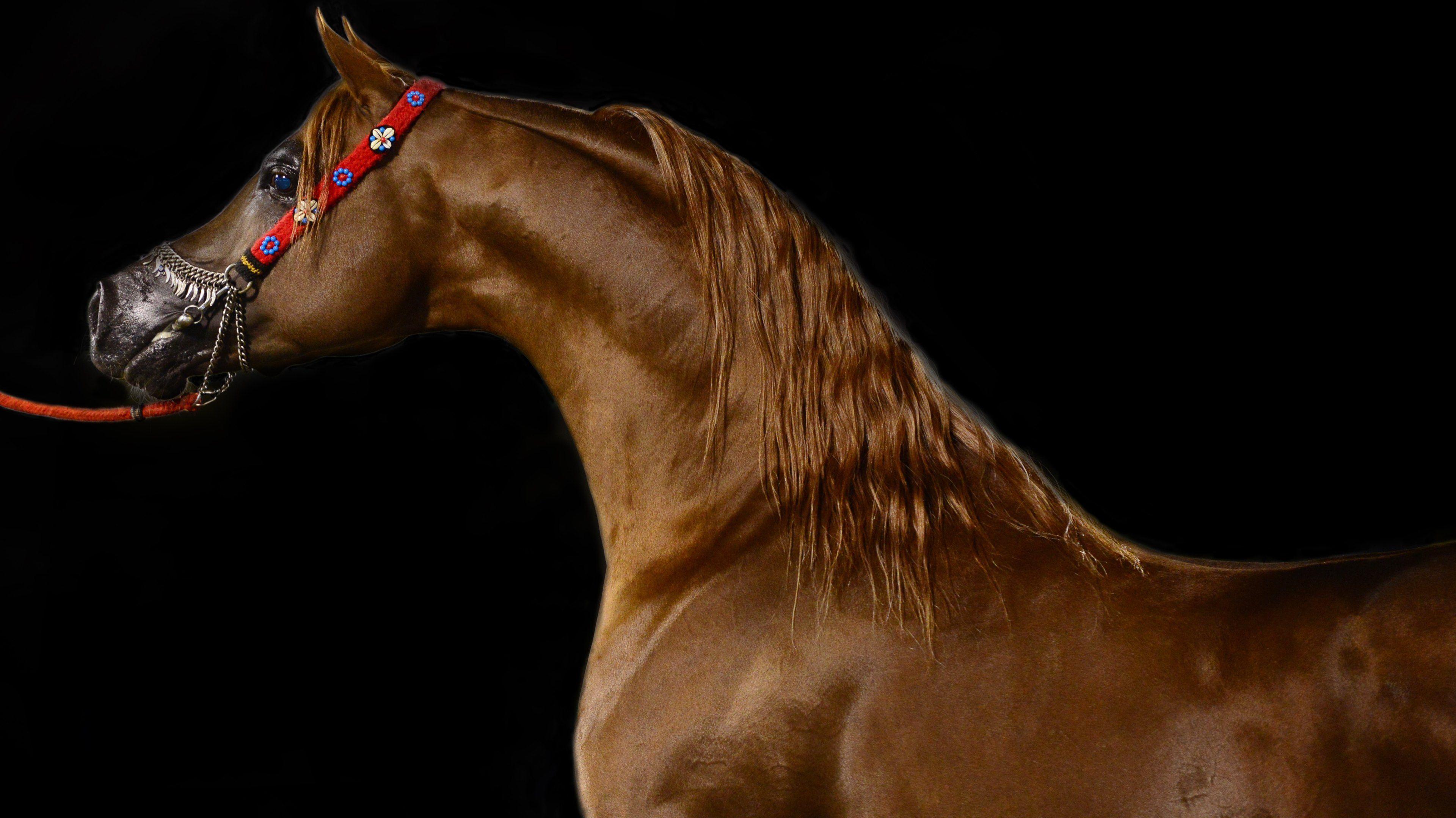 Great Wallpaper Horse Ultra Hd - 5fb1916ab73b67c1950846cbf58a3783  Pic_605811.jpg