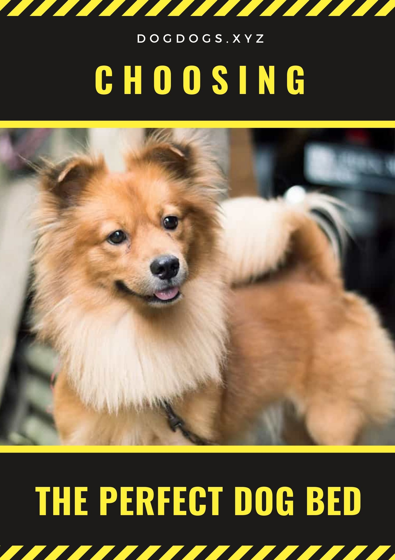 Choosing The Perfect Dog Bed Positive Dog Training Best Dog