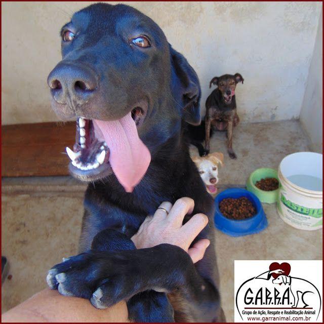 G.A.R.R.A. - Grupo de Ação, Resgate e Reabilitação Animal: Um sábado feliz com Zeus!