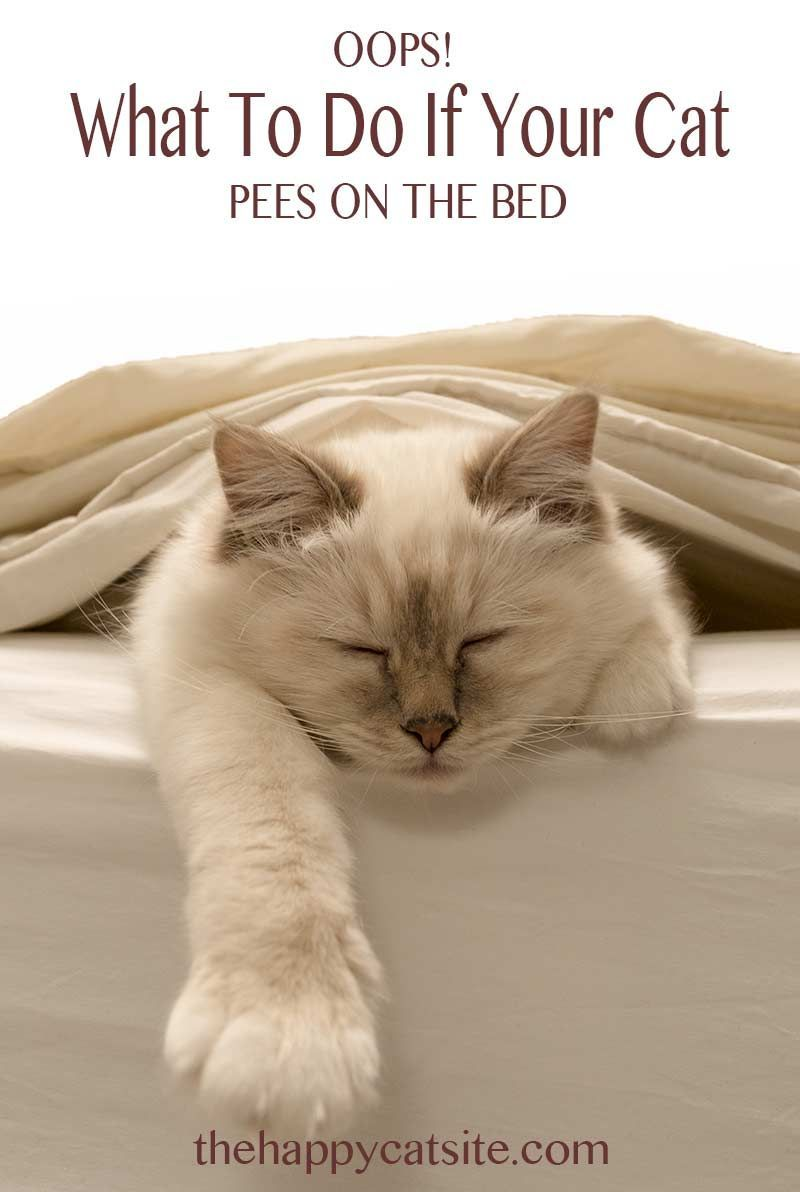 Cat Peeing On Bed Covers Why They Do It And How To Stop Them Cat Peeing In House Cat Pee Cat Training