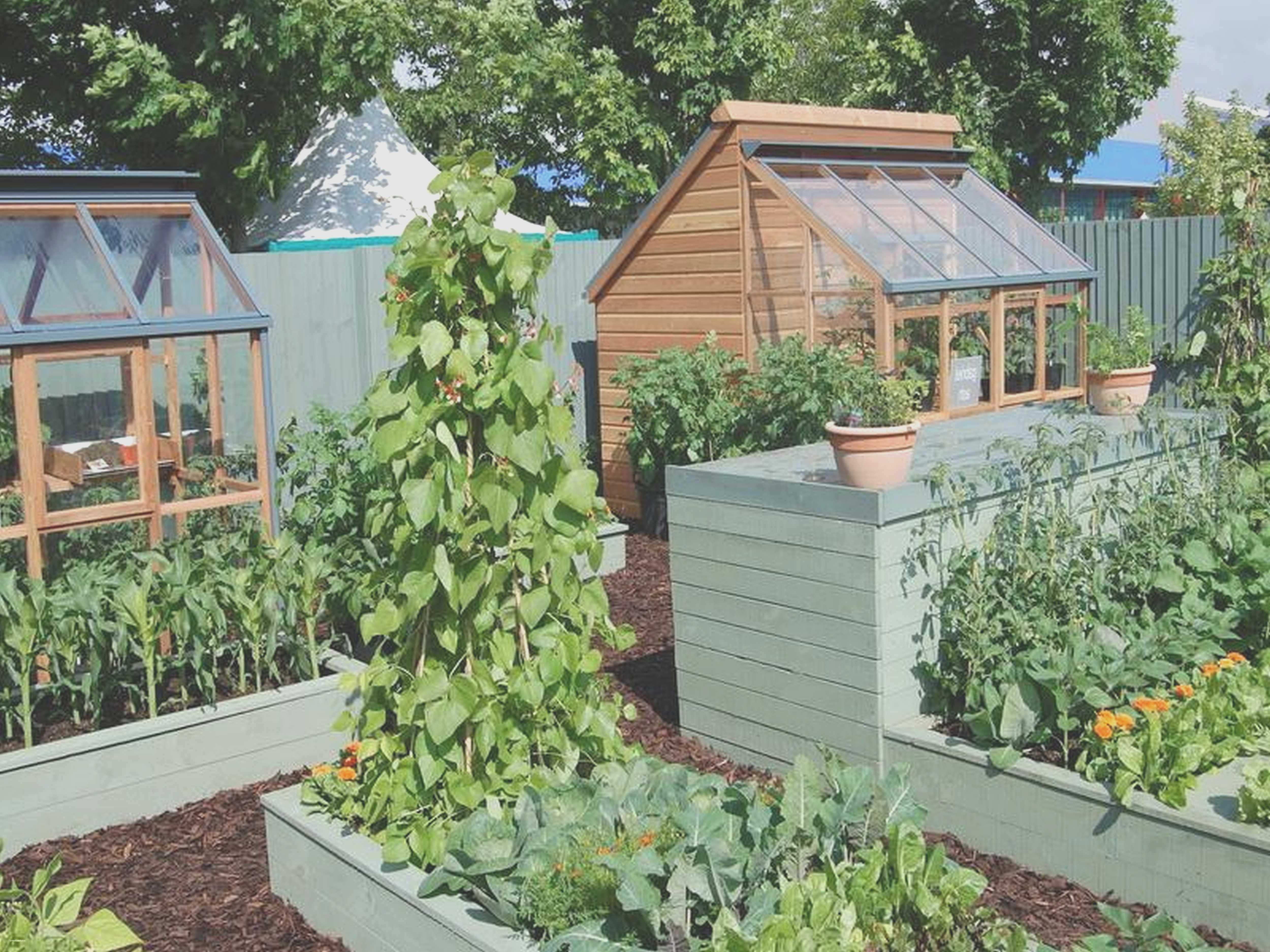 Raised Garden Ideas Diy Vegetable   Lovely Raised Garden Ideas Diy ...