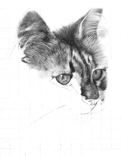 Pencil cat drawing work in progress onlypencil drawing tutorials