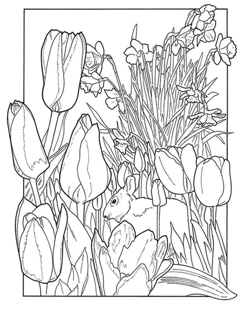 tulips and bunny  malvorlagen frühling ausmalbilder