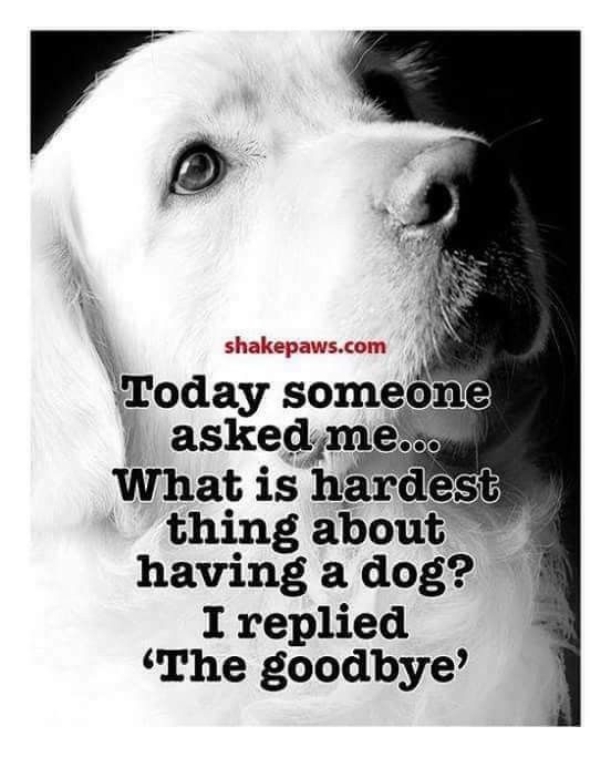 Loss Of A Dog Quotes Pinclaudia Giddings On Paw Prints  Pinterest  Dog Pet Loss
