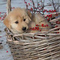 kodi hayley pups