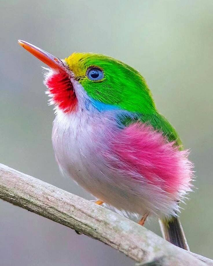 Love The Colors Are They Real Pretty Birds Birds