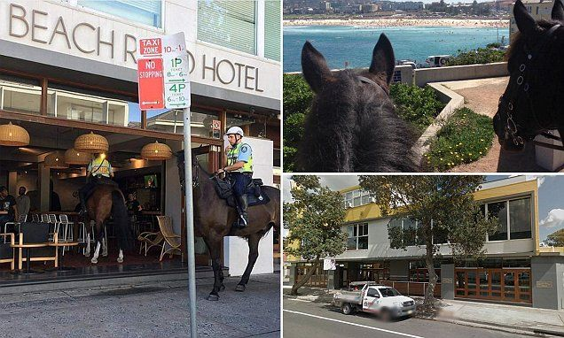 Photo captures moment a Sydney police horse takes wanders in to a Bondi pub | Daily Mail Online