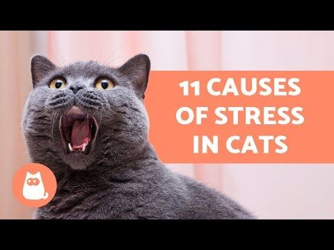 My Quality Pet Supplies Causes of Stress in Cats
