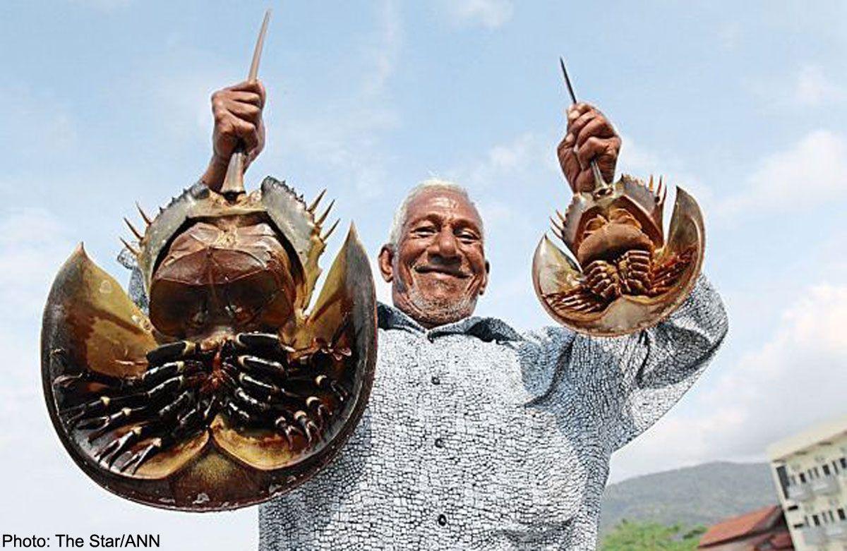 Pin de vicente castillo em pré história pinterest horseshoe crab