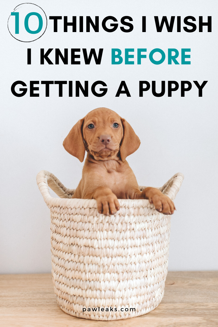 10 things I wish I had known before I started potty
