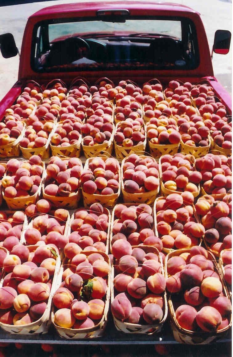 Chilton Co AL peach truck. Best peaches in the world. SC