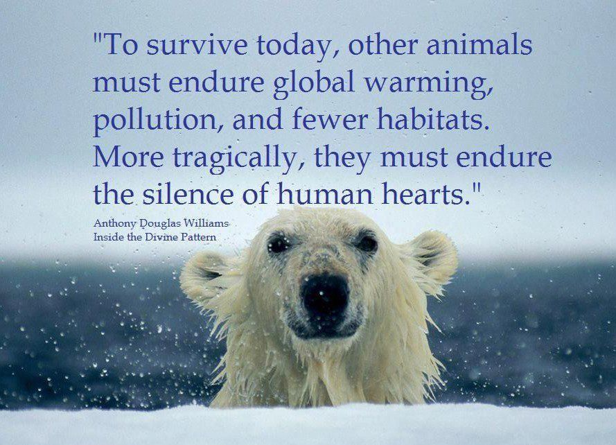 Global Warming Is Real Global Warming Pinterest Animals Simple Global Warming Quotes